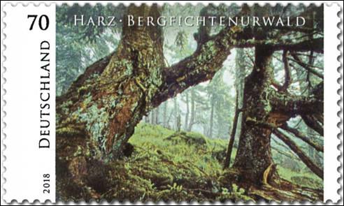 Harz Bergfichte Urwald