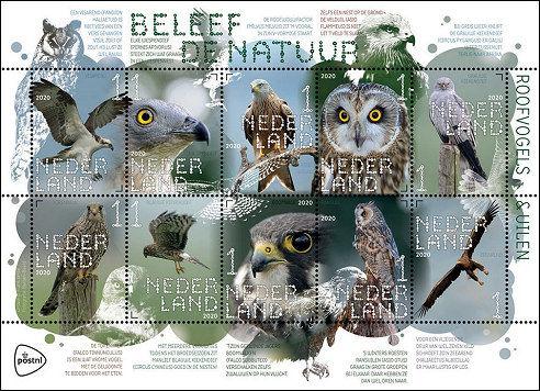 Roofvogels en uilen in Beleef de natuur