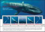 Bedreigde zoogdieren: blauwe vinvis